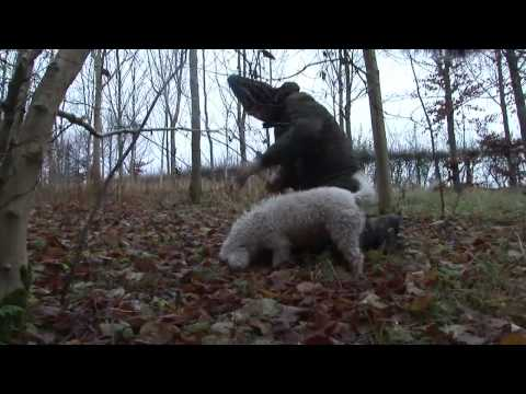 Truffle Hunt In UK