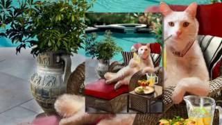 Коты и другие животные в живописи  Джины  Фемрайт