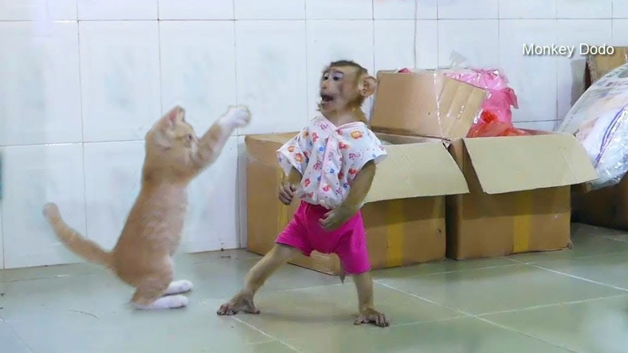 Wow Kitty Cat Very Friendly And Make Closely To Dodo When Playing