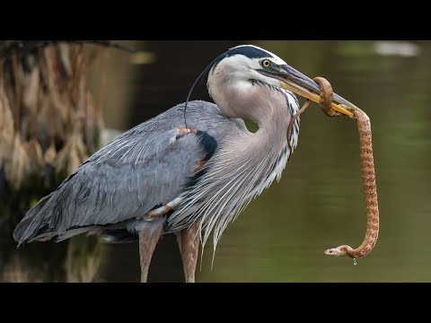 Nikon D850 Nikon 500 F4 - Best Bird / Wildlife Photography Experience 2018