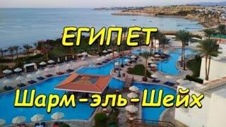 Лучший риф в Шарм эль Шейхе в Египте риф возле отеля Siva Sharm