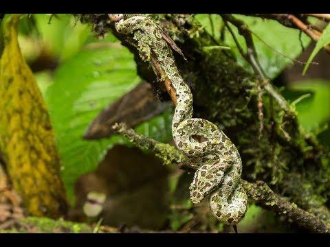 Costa Rican Travel Adventures to Aerenal Volcano, La Fortuna,  and Tamarindo