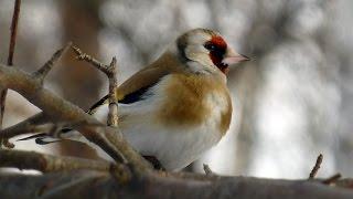 Фильм про птиц