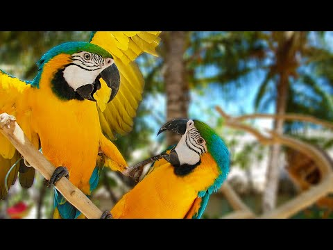 When Macaws ATTACK! Training Them NOT To | Tusa vs Jinx