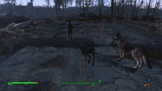 Случайные встречи в Fallout 4. Торговец собаками Джин