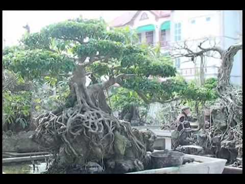 Vuon Cay canh Nghe thuat Chinh Thai len TV - part 2.wmv