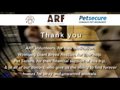 35 Dogs Rescued - ARF trip to Winnipeg from Calgary - Trip #2