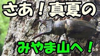 nokogirin(ノコギリン)の クワガタムシとカブトムシのチャンネルへよ...