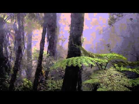 Sounds Forest Rain at Night, Crickets Owls Rain Wind, Naturals Sounds  Sounds Sleeping, Relaxing