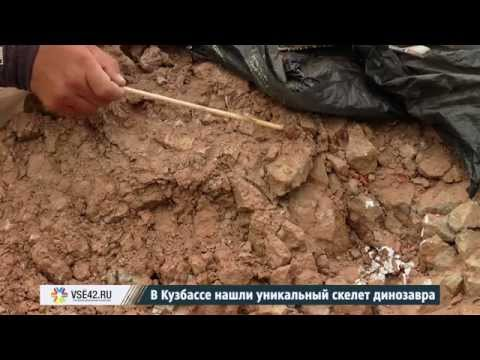 В Кузбассе нашли уникальный скелет динозавра
