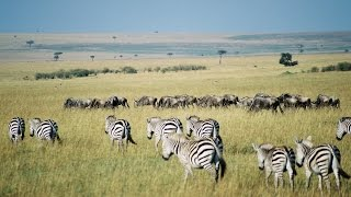Kenya: Top 10 Tourist Attractions - Video Travel Guide
