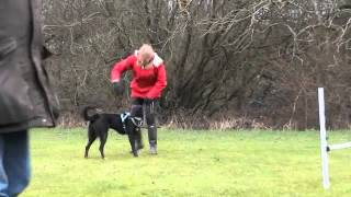 Dog Agility Training Surrey - Basic Jumps