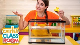 Caitie's Classroom Live -⛵️ Will it Sink or Float? ⛵️
