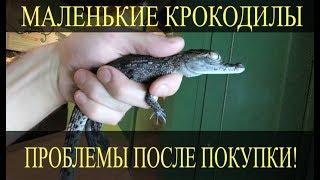 Молодые крокодилы! С какими проблемами можно столкнуться после покупки маленького крокодила?!