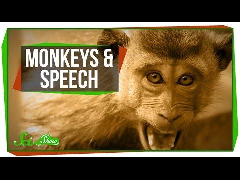Why Can't Monkeys Talk Like Us?