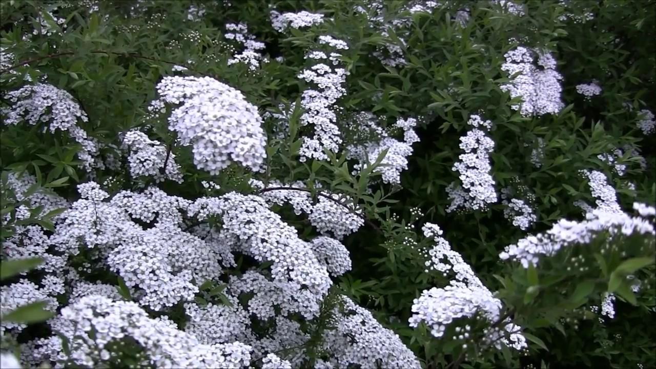 Растения в москве. Готовые цветочные композиции, деревья и кустарники. Качественная продукция по хорошей цене.
