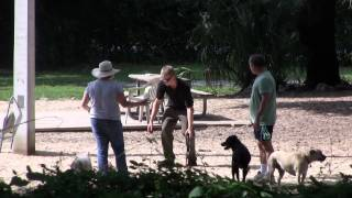 Blind Guy Walking Dead Animal Prank