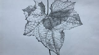 How to Draw And Shade a Leaf   Leaf Drawing in Pencil   Foliage Drawing