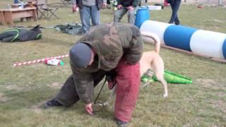 Ace P.i. Protection - Dog Training