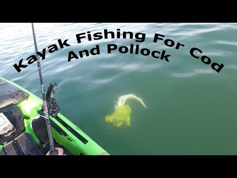 Kayak Fishing For Cod And Pollock