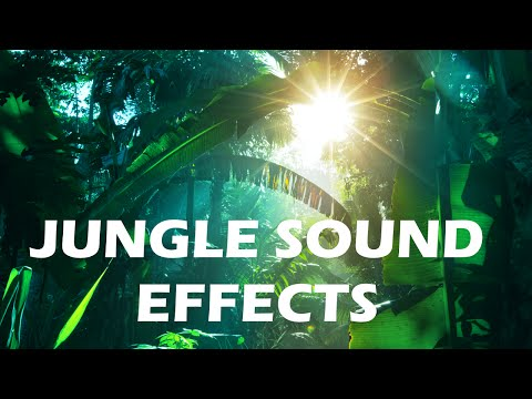 Jungle and Rainforest Sound Effects - Tropical Forest Ambiences from Costa Rica