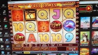 online slot Safari huge win