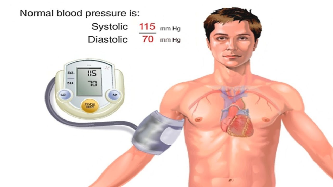 How Blood Pressure Works Animation - Understanding Blood Pressure ...