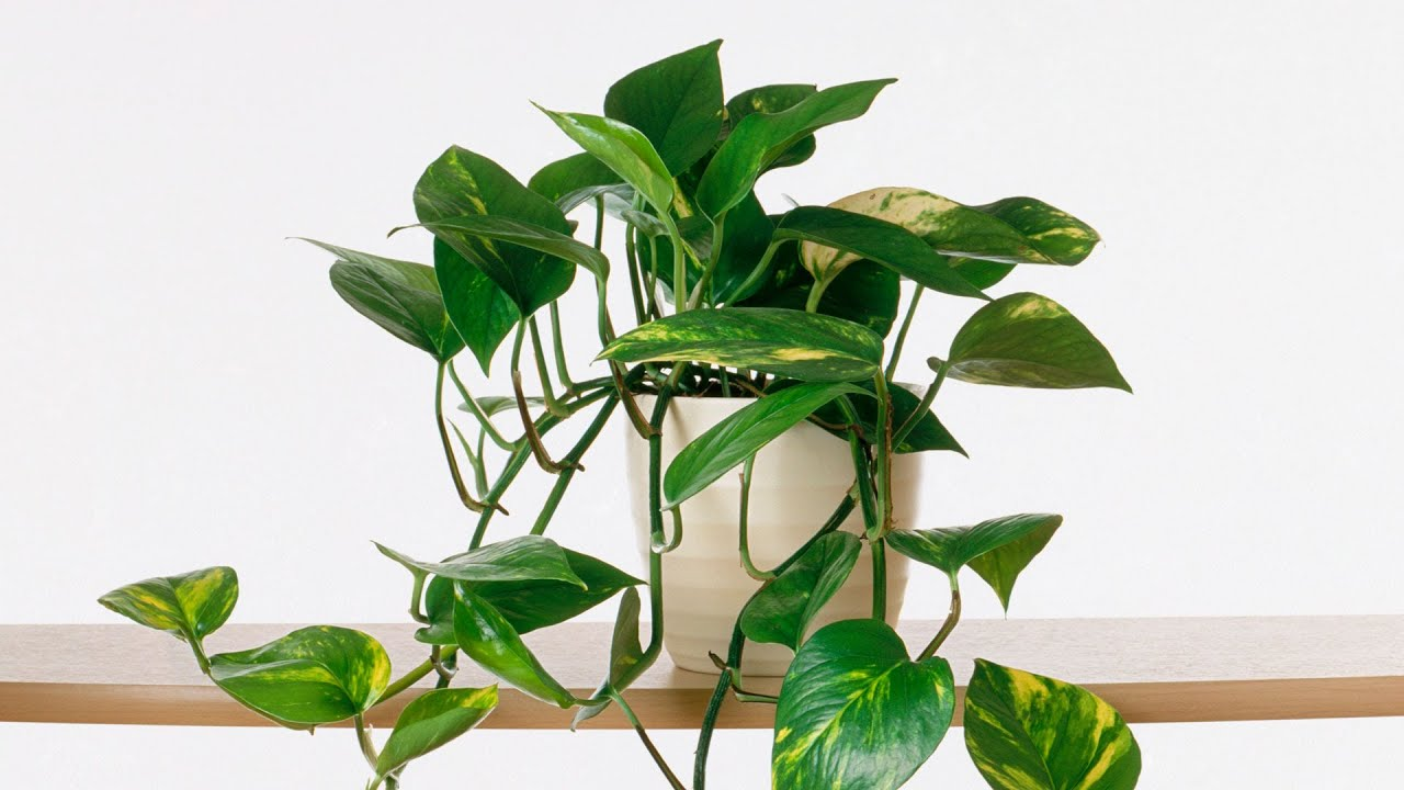 Growing Indoor Plants | Southern Living - YouTube