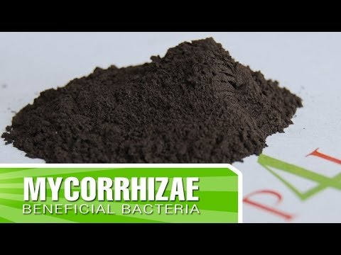 How to create strong roots in your plants with Mycorrhizae + Inoculants