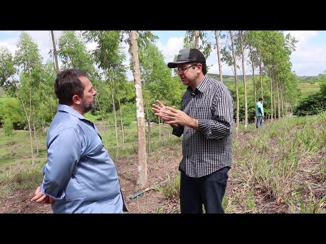 Produtor inova em AL e implanta projeto comercial de Integração Floresta-Pecuária