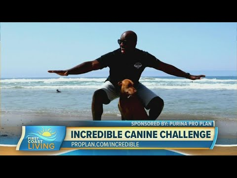 How you can watch the  &39;Purina Pro Plan Incredible Dog Challenge Western Regional&39; event