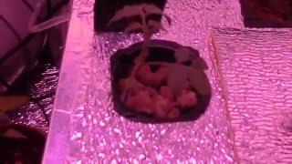 Гроубокс в шкафу №3