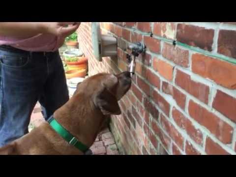 Lixit ™ Original Dog Faucet Waterer Training - YouTube