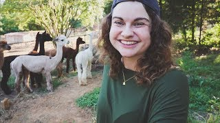 Do You Hear That Coming? (Also, Alpaca Kissers)   VLOG   Roots and Refuge Farm