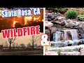 CALIFORNIA WILDFIRES WIPE OUT PONDS!