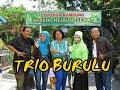 Trio Burulu-cak Boy Kurban Sapi
