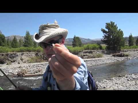 Fly Fishing News Video and Song | Public Service Warning F.P.I and Trout