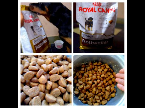 Royal Canin Junior review on my 7 months old Rottweiler puppy!! Did she liked it ?