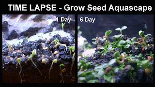 Carpet Seed Timelapse 6 Day Progress Aquascape Mini