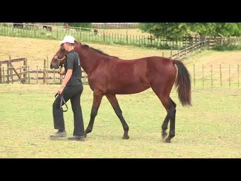 Lot 123 – Cheeky Babe (bay filly Muscle Hill / Factor The Odds)