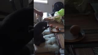 Кот с яйцами)