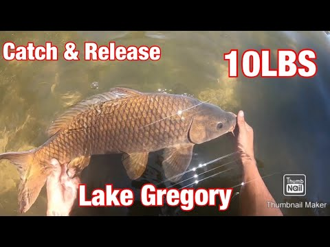 Fishing For Carp & Trout - Lake Gregory