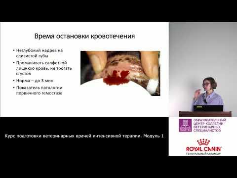 4 - Анализы крови