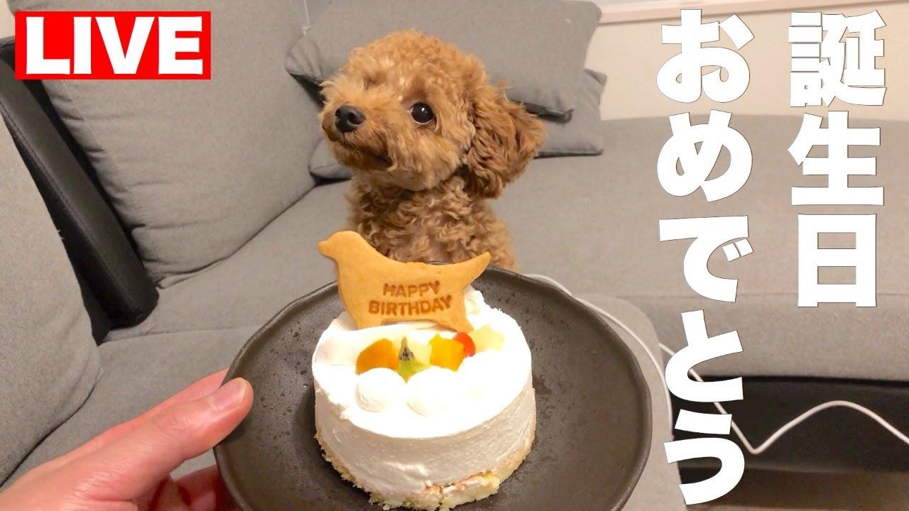 ハン君お誕生日おめでとう
