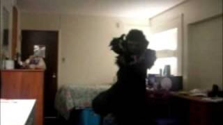 Furry Get Down(Geddan)