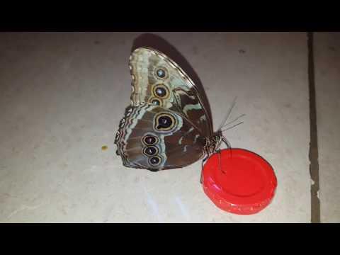Вопрос: Как кормить бабочек?