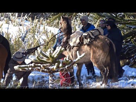 Gael Garcia Bernal caindo do cavalo no Chile