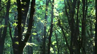 Relaxing Music, Meditation Music, Sleep Music (Forest Sunlight)