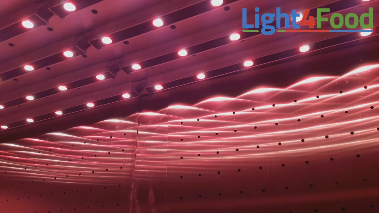 Production Light4food Greenpower Led Philips Module Dynamic 8nwOPk0