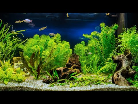 Getting Started With Aquascaping [Live Stream]